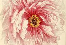 Картинки цветов и растений