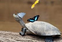 just butterflies / by Laura Rank