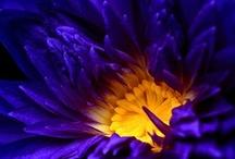 flowers / by Jelena