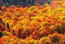 Prachtvoller Herbst