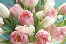 kytice / bouquet / Kytice, květiny ...