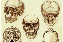 Anatomía cara