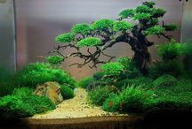 Beautiful Fish tanks and Aquariums / Fish tanks and Aquariums