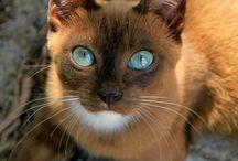 Precious cats / Cats