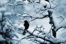 Winter nature / Winter natural