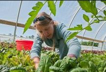 Fenntartható Étkezés / Eating Sustainably