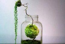 floreal composition & green