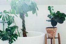 urban jungle / cactus & co.