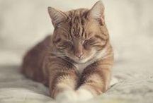 ANIMALS: Cats