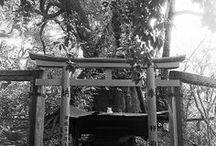 Cat Photos by Satoru Suyama