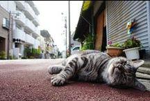 Cat Photos by Shiro Yamashita / Street cat inTokyo. Photo by Shiro Yamashita @東京猫色