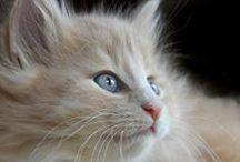kediler CATS
