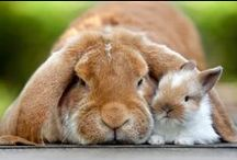 Kaninchen / Bunnies / Rabbits / alles rund um Kaninchen