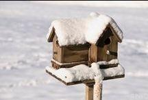 kuş yuvası  -------        birds hause / by Muzaffer Hanoglu