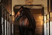 BEAUTY OF LIFE: Equestrian
