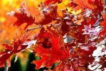 sonbahar--------fall--autumn