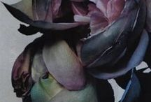 #13(flowers)