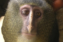 Primates / by Ana Ducoing