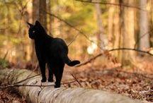 CatsCatsCats<3  / by Kristen Jade