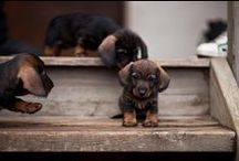 Dogs / by Alex Caisse