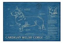 The Cardigan Welsh Corgi