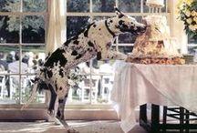 Pets at weddings! / by Emma Bunting