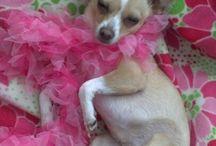 Dog Love / Dogs / by Brenda Jowers