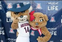 "Wilbur and Wilma / The University of Arizona's mascots are a pair of wildcats named Wilbur and Wilma. In 1986, Wilbur married his longtime girlfriend, Wilma. Introduced in 1915, Arizona's first mascot was a real bobcat named ""Rufus Arizona."""
