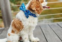 The Southern Pup / Classic southern haberdashery for the dapper doggie sold online & in fine clothiers. www.thesouthernpup.com