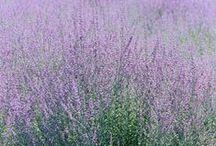 Nature & all it's splendor / Landscape, Gardening, flowers etc