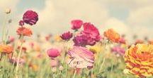 insp: flowers&plants