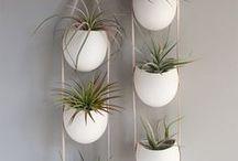 Plant Life / plants, diy plant vases, herb gardens, succulent everything!