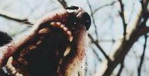 myth: werewolves
