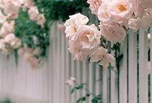 Gardens / Beautiful gardens|garden insp
