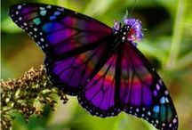 Butterflies / by Magdalena76th Pins