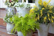 """Jardinaria / O ato de criar um jardim, de cuidar de uma planta e de se preocupar com o """"outro"""" retira da mente do individuo a solidão, a tristeza e o medo!!! Pratique a jardinaterapia. Informações blog.atelienatureza.com.br"""