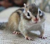 かわいい動物 kawaii animals / かわいい動物の写真。ほとんどリスです。リス大好きなんです!