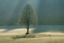 landscape-ref