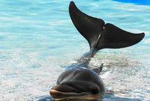 Dolphins :) / Marine Mammals
