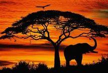 Sunrise/Sunset / Sunrises and sunsets.... silhouettes