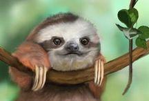 Fotos - Sloths