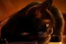 Fotos - Cats