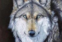 Fotos - Wolves