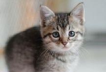 Kitty Love *PURR PURR PURR!* / Cats, the best creatures on Earth. Feel free to comment like and repin any of my pins!!! / by ★♬Mår¢hïñg ßåñÐ♬★ ♡GðÐÐꧧ♡