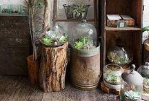 Indoor Garden Ideas / Indoor Plants and Gardening Inspiration