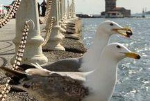 Istanbul / Reise Report / kosmopolitische Stadt am Bosporus, das alte Istanbul, das moderne Istanbul, Weltstadt