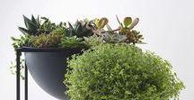 green ROOMS / zieleń we wnętrzach