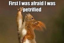 Things that make me laugh...