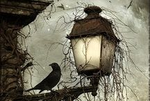 Ravens and Crows / Ravens, Crows, Owls, and other birds that speaks to me. / by MoonRaven NightShadow