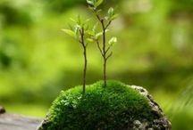 Seeds of Inspiration
